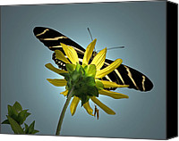 American Special Promotions - Zebra Longwing Canvas Print by Peg Urban