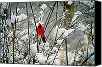 Karen Adams Canvas Prints - Cardinal in Winter Canvas Print by Karen Adams