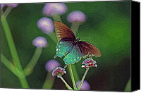 Pipevine Swallowtail Butterfly Digital Art Canvas Prints - Pipevine Swallowtail Butterfly Canvas Print by Karen Adams