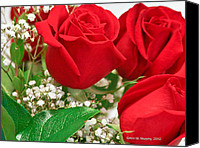Photographs With Red. Canvas Prints - 3 Red Roses with Babys Breath Canvas Print by Ann  Murphy