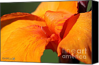 Canna Lilies Canvas Prints - Canna Lily named Wyoming Canvas Print by J McCombie