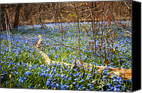 Forest Floor Canvas Prints - Spring blue flowers glory-of-the-snow Canvas Print by Elena Elisseeva