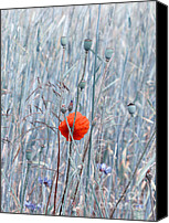 Poppies Canvas Prints - Red Canvas Print by Kristin Kreet