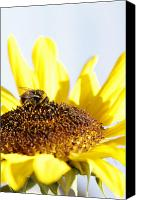 Bee Canvas Prints - Bee on flower Canvas Print by Les Cunliffe