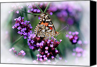 Karen Adams Canvas Prints - American Painted Lady Butterfly Canvas Print by Karen Adams
