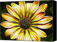 Manipulated Photo Canvas Prints - African Daisy in Yellow Canvas Print by ABeautifulSky  Photography
