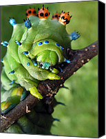Alien Canvas Prints - Alien Nature Cecropia Caterpillar Canvas Print by Christina Rollo
