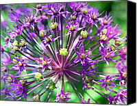 Purple Flowers Canvas Prints - Allium series - Close Up Canvas Print by Moon Stumpp