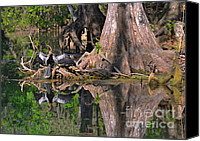 Wetlands Canvas Prints - American Anhinga or Snake-Bird Canvas Print by Christine Till