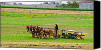Guy Whiteley Canvas Prints - Amish Farmer Canvas Print by Guy Whiteley