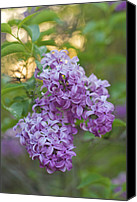 Nature Photography Special Promotions - An Elegant Pair Canvas Print by Jane Eleanor Nicholas