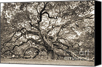 Big Tree Canvas Prints - Angel Oak Tree of Life Sepia Canvas Print by Dustin K Ryan