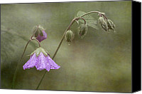 Wild Geranium Canvas Prints - Antecedent Bloom Canvas Print by Dale Kincaid