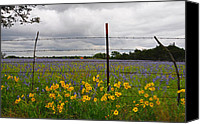 Barbed Wire Fences Canvas Prints - Barbs n Blooms Canvas Print by Lynn Bauer