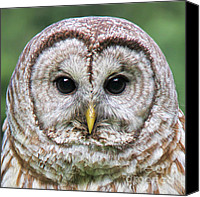 Feather Special Promotions - Barred Owl Portrait Canvas Print by Jennie Marie Schell