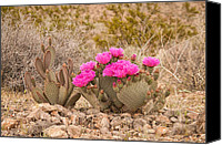 Cavern Canvas Prints - Beavertail Cactus Canvas Print by Rich Leighton