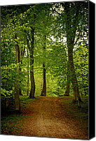Odd Jeppesen Canvas Prints - Beeches Canvas Print by Odd Jeppesen