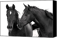 Wild Horses Canvas Prints - Best Buds Canvas Print by Rich Franco