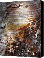 Natural Abstract Canvas Prints - Birch Bark Canvas Print by ABeautifulSky  Photography