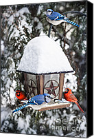 Feed Canvas Prints - Birds on bird feeder in winter Canvas Print by Elena Elisseeva