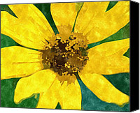 Susan Drawings Canvas Prints - Black Eyed Susan Canvas Print by Rosemarie E Seppala