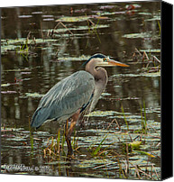 Ken Williams Canvas Prints - Blue Heron Canvas Print by Ken Williams