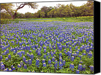 Bluebonnets Canvas Prints - Bluebonnet Pasture Canvas Print by Bill Morgenstern
