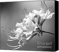 Black And White Digital Art Digital Art Canvas Prints - Breathtaking in Black and White Canvas Print by Suzanne Gaff
