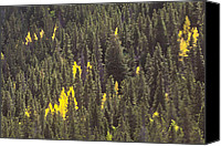 Photos Of Autumn Canvas Prints - Bright Aspens Canvas Print by Alan Tonnesen