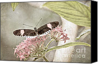 Peggy J Hughes Canvas Prints - Butterfly Whisper Canvas Print by Peggy J Hughes
