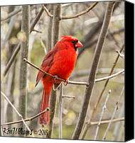 Wildlife Pyrography Canvas Prints - Cardinal Canvas Print by Ken Williams