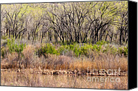 Chama River Canvas Prints - Chama River Bank Canvas Print by Lisa Gakyo Schaewe