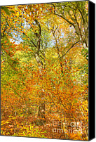 David Birchall Canvas Prints - Changing Color Canvas Print by David Birchall