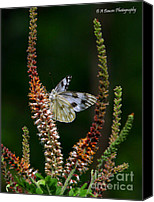 Barbara Bowen Canvas Prints - Checkered White on an Indigo Canvas Print by Barbara Bowen