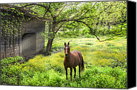 Pony Canvas Prints - Chestnut Horse in a Sunny Meadow Canvas Print by Debra and Dave Vanderlaan