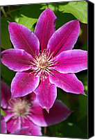 Purple Flowers Digital Art Canvas Prints - Clematis Flower Canvas Print by Christina Rollo