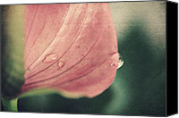 Floral Florals Canvas Prints - Close to Falling Canvas Print by Laurie Search