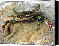 Joan Mccool Canvas Prints - Crab Sketch Photo Canvas Print by Joan McCool