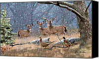 Art For Sale Painting Canvas Prints - Deer Art - First Snow Canvas Print by Dale Kunkel