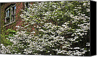 Trees Blossom Canvas Prints - Dogwood Changes Everything  Canvas Print by JC Findley