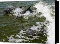 Melinda Saminski Canvas Prints - Dolphins at play Canvas Print by MMelinda Saminskielinda Saminski