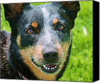 Blue Heeler Canvas Prints - Enjoying the Sun Canvas Print by Victoria Sheldon