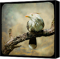 Aves Canvas Prints - Exotic Bird - Guira Cuckoo Canvas Print by Gary Heller