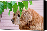 Mary Deal Canvas Prints - Faithful Old Bud Canvas Print by Mary Deal