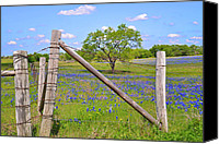 Barbed Wire Fences Canvas Prints - Fenced-In Beauty Canvas Print by Lynn Bauer