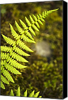 Grow Digital Art Canvas Prints - Fern Canvas Print by Christina Rollo