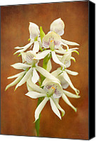 Mike Savad Canvas Prints - Flower - Orchid - A gift for you  Canvas Print by Mike Savad