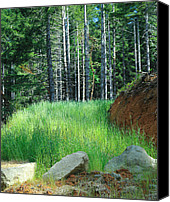 Katie  Wing Vigil Canvas Prints - Forest Grasslands Canvas Print by Katie  Wing Vigil