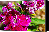 "\""macro Photography\\\"" Canvas Prints - Fresh Rain Canvas Print by Scott McGuire"