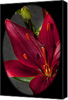 Stamen Macro Photo Special Promotions - Fuchsia Red Lily Canvas Print by Phyllis Denton